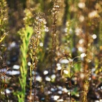 Photograph of weeds growing on wasteland in Norwich, Norfolk