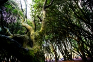 Photograph of trees at Corton beach, Lowestoft Suffolk