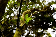 Photograph of tree and leaf at Corton beach, Lowestoft Suffolk