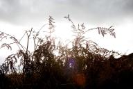Photograph of bushes at Corton beach, Lowestoft Suffolk