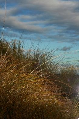 Photograph of grass at Corton beach, Lowestoft Suffolk